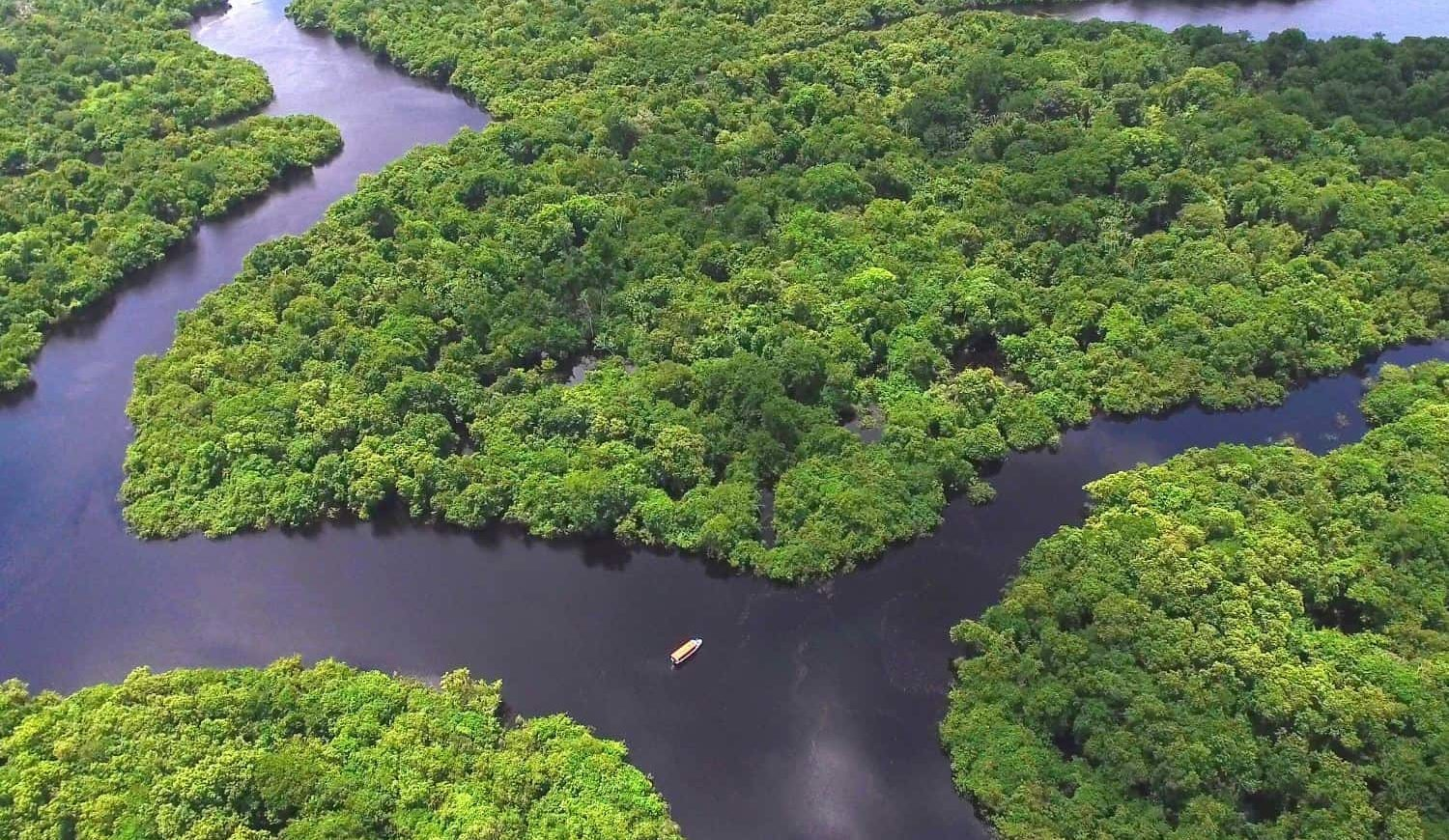 Aerial view of the Amazon rainforest in Para, Brazil