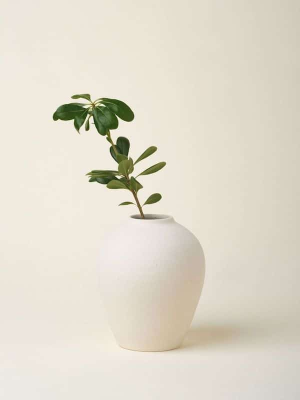 August Sage Solenne Vase In Crema August Sage 497592 768x.progressive