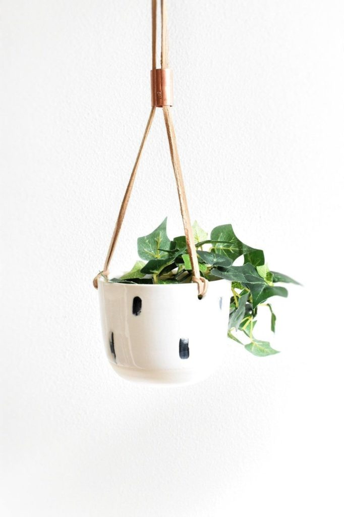 hanging plater with a plant