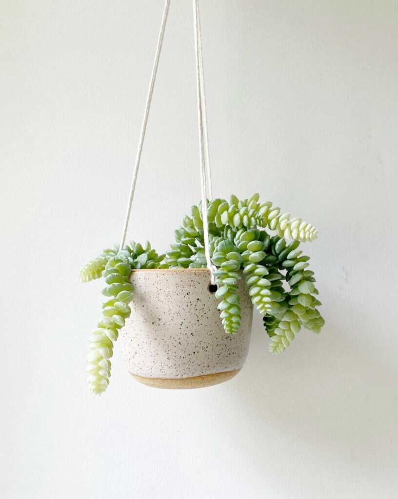 Katie Mudd Stoneware Hanging Planter White Home Decor Katie M Mudd Ceramics 932884 1500x 2